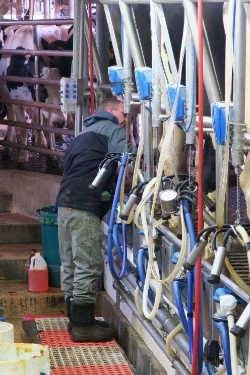 Chris Hickey works Sparkman Farm dairy